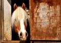 Pferdesteuer in Deutschland