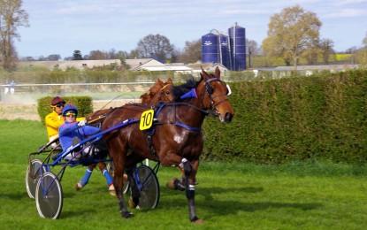 Traber – 7 interessante Fakten über diese Pferde