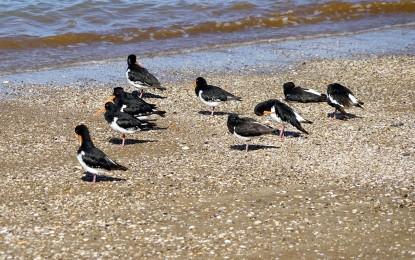 Vögel am Strand – 4 häufige Wasservögel