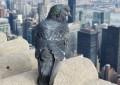 Vögel in der Großstadt – 5 häufige Gäste