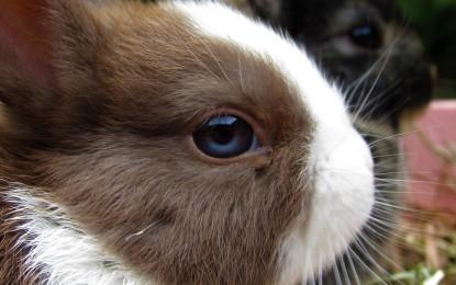 Zahnabnutzung bei Kaninchen – hilfreiches Futter