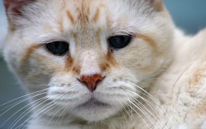 Wenn die Katze alt wird: Wie das Zusammenleben mit der Seniorkatze gelingt