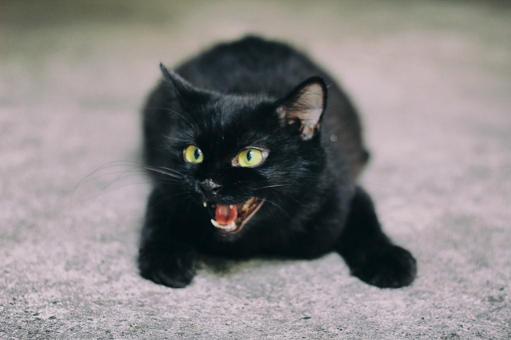 beliebteste Katzennamen