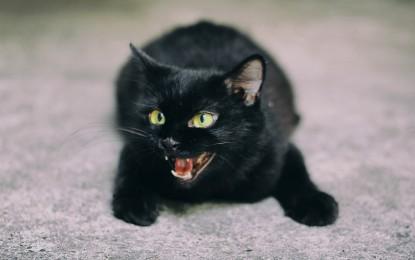 Die beliebtesten Katzennamen Deutschlands