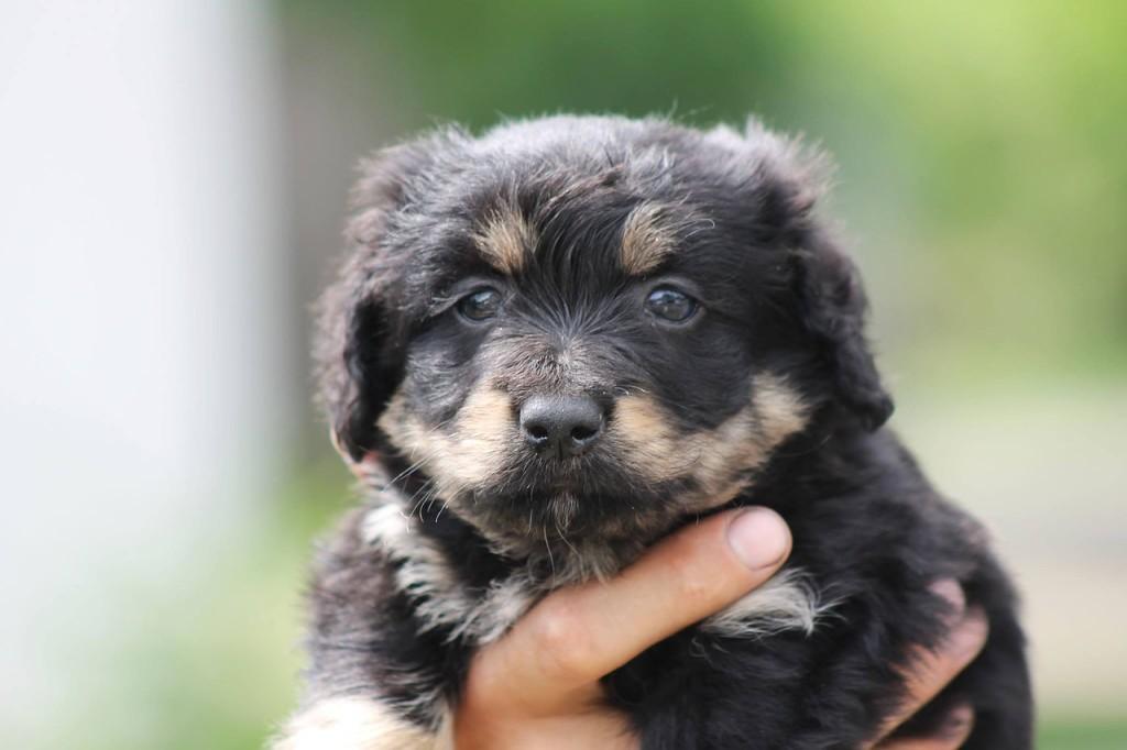 die beliebtesten Hundenamen