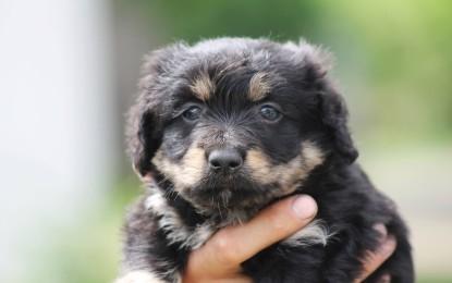 Die beliebtesten Hundenamen Deutschlands