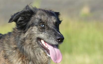 Gute Hundegeschirre – 5 empfehlenswerte Brustgeschirre für Hunde