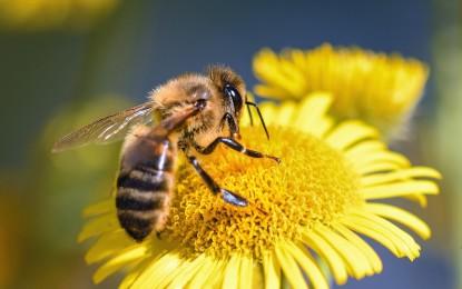 Bienen helfen – 4 Ideen