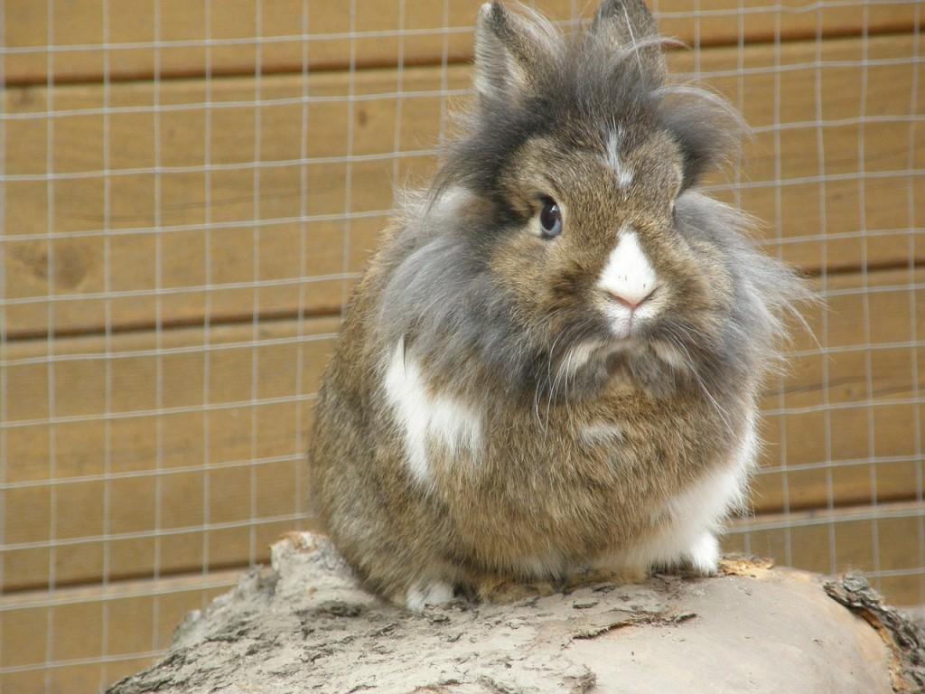 Schneidezaehne beim Kaninchen