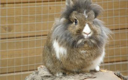 Schneidezähne beim Kaninchen nutzen sich nicht ab