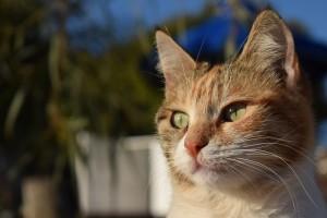 cat-3006129_960_720