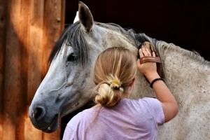 horse-love-2818959_960_720