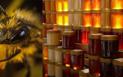 Hobby-Imker werden – Eigener Honig