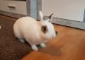 Die häufigstem Krankheiten von Kaninchen
