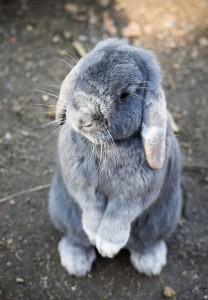 bunny-1276628_960_720