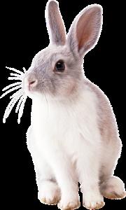 rabbit-2649157_960_720