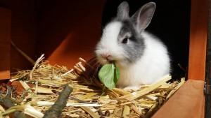 rabbit-2940275_960_720