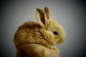 rabbit-373691_960_720