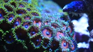 saltwater-fish-2768287_960_720