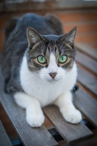 02 Katze