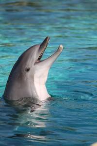 11 Delphin