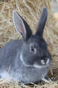 14 Kaninchen