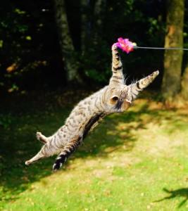 cat-1680873_960_720