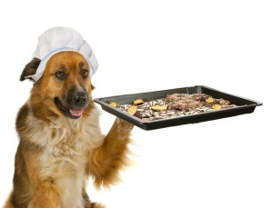 Dog with a chef´s hat is offering christmas cakes