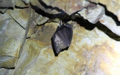 Fledermäuse – unsere verborgenen Mitbewohner