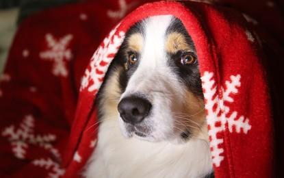 Tödliche Weihnachtszeit für Haustiere