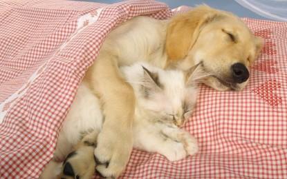 Gehören Hund und Katze mit ins Bett?
