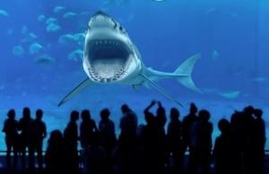 Weisser Hai - Aquarium