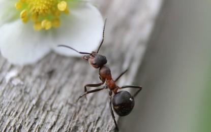 Sich Ameisen halten