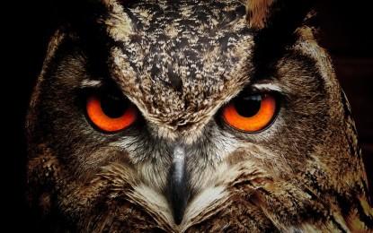 Der lautlose Jäger