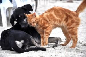 03 Hund und Katze