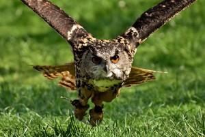 owl-3367439_960_720