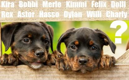 Hundeerziehung – Warum der Name wichtig ist