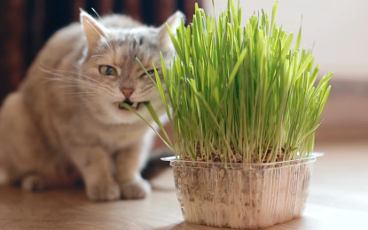 Katzengras hilft Katzen bei der Verdauung