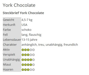 2 York Chocolate (Steckbrief)