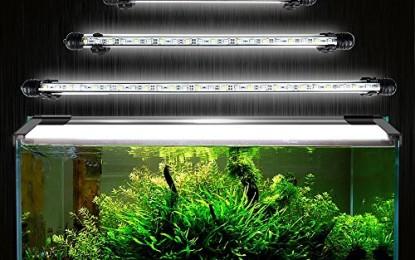 Was man schon immer über Beleuchtung im Aquarium wissen wollte