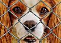 Ein Hundezaun bietet Hund und Hundehalter Schutz und Sicherheit – Mobil, elektrisch, unsichtbar oder traditionell