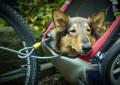 Hundeanhänger für sportliche und gemütliche Fahrradtouren mit Mensch und Hund