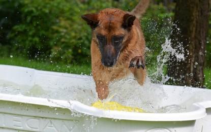 Ein Hundepool – die wichtige und zugleich lustige Abkühlung an warmen Sommertagen