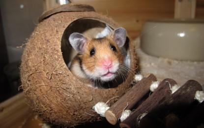 Hamsterutensilien für eine artgerechte Haltung