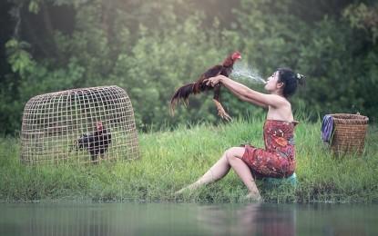 Das Huhn – Ein Tier mit Tradition