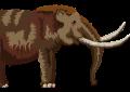 Wie die Mammuts austarben