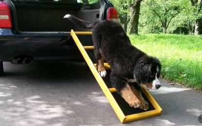 Hunderampen – Die nützlichen Helfer im Alltag von Hund und Mensch