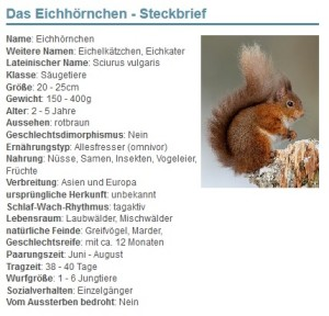 01 Das Eichhörnchen - Steckbrief