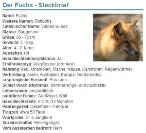 01 Der Fuchs - Steckbrief