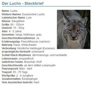 01 Der Luchs - Steckbrief